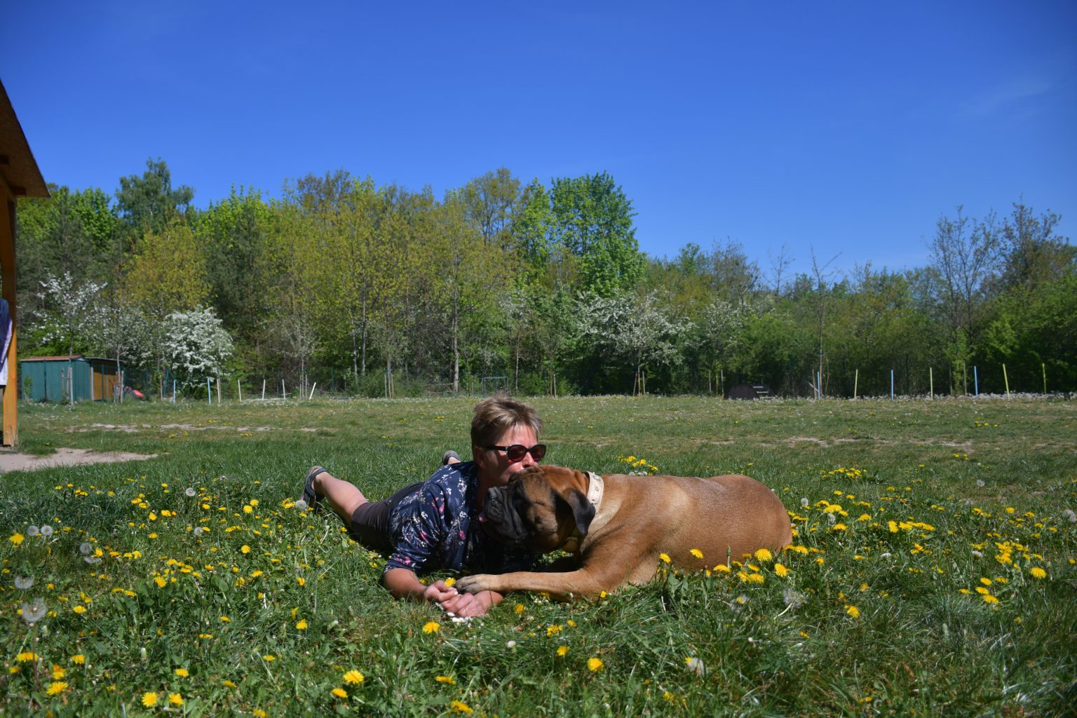 Über mich – Bullmastiff of Franconian Shamrock