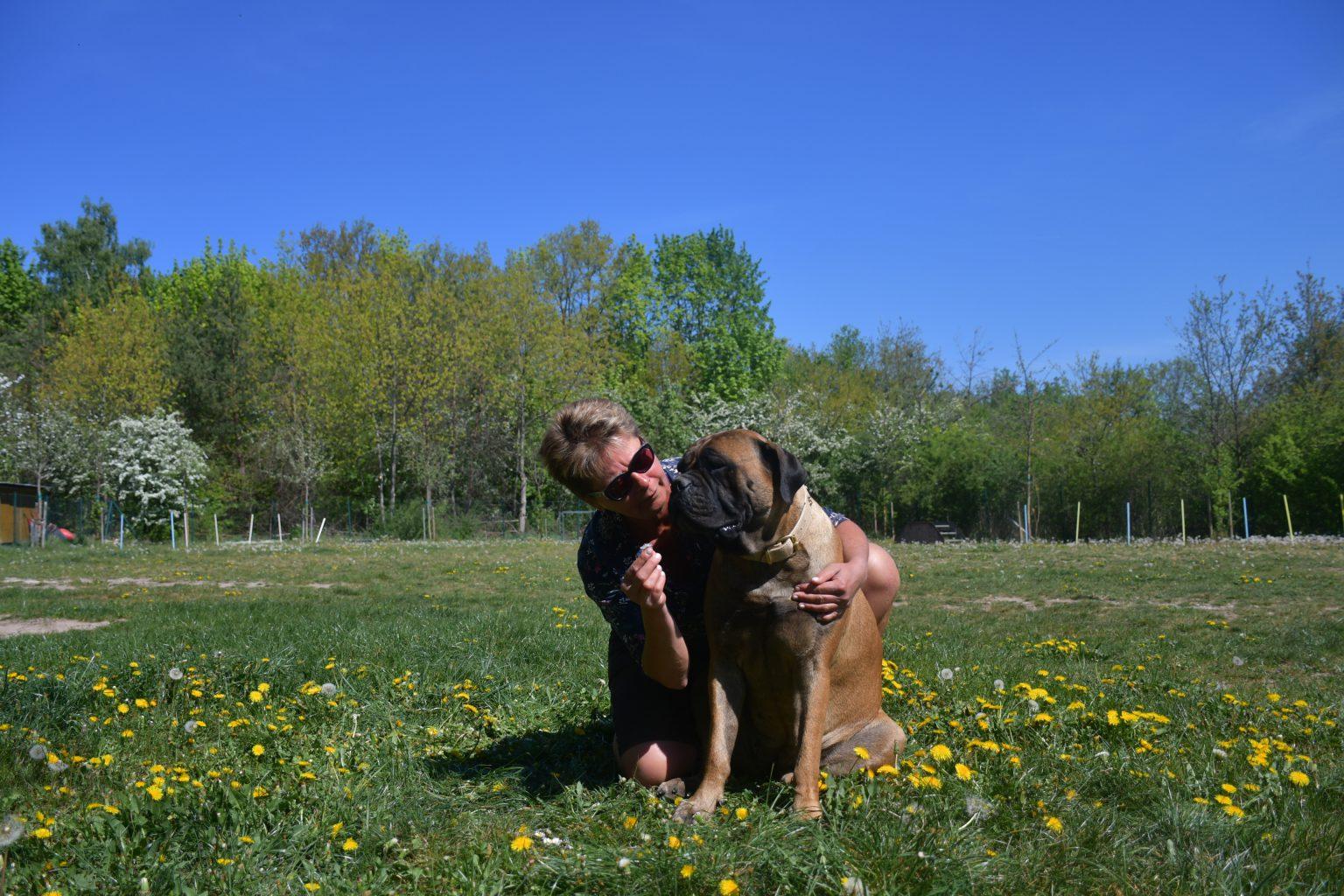 About us – Bullmastiff of Franconian Shamrock